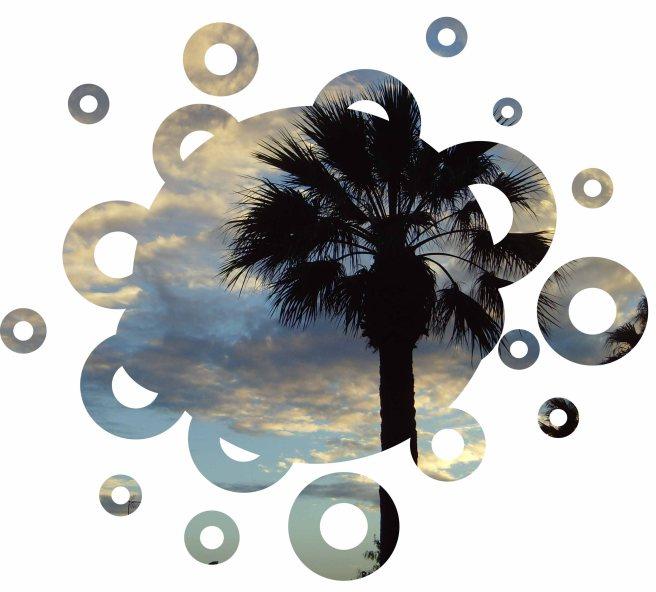 majorca palm