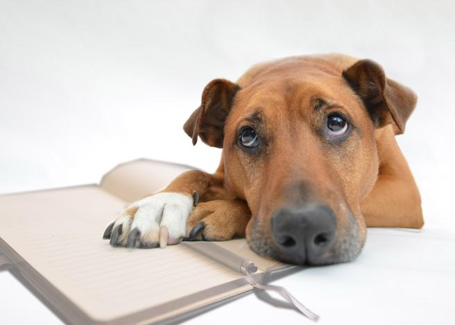 dog&book