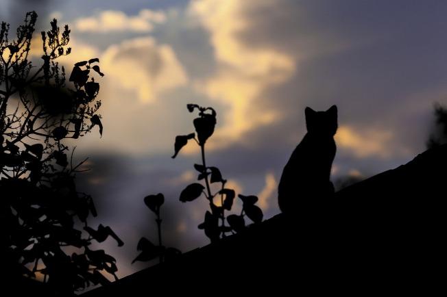 cat-1287438_1920