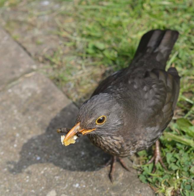 junkfoodbird